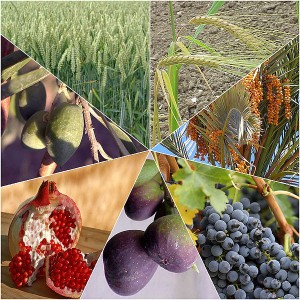 The Seven Species. Clockwise from top left: wheat, barley, dates, grapes, figs, pomegranate, and olives.